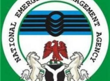 Insurgency: NEMA registers fresh 2046 IDPs in Bornu