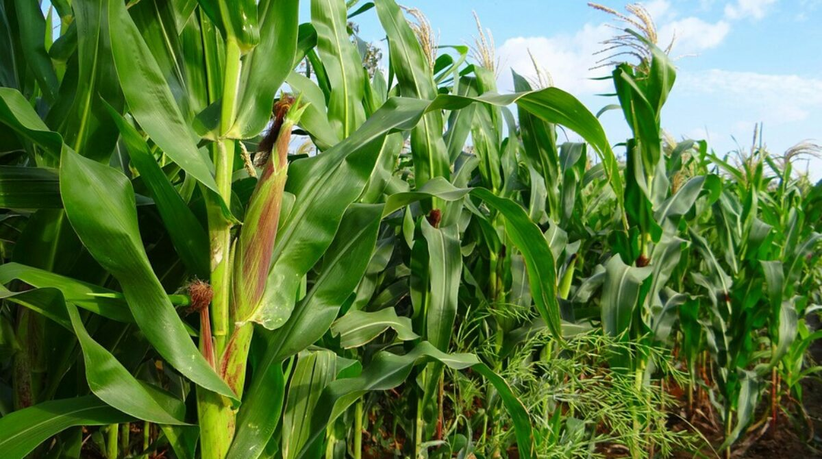 Malnutrition: Experts advocate home gardening, return to local foods
