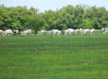 Sanwo-Olu bans open grazing in Lagos, signs bill into law